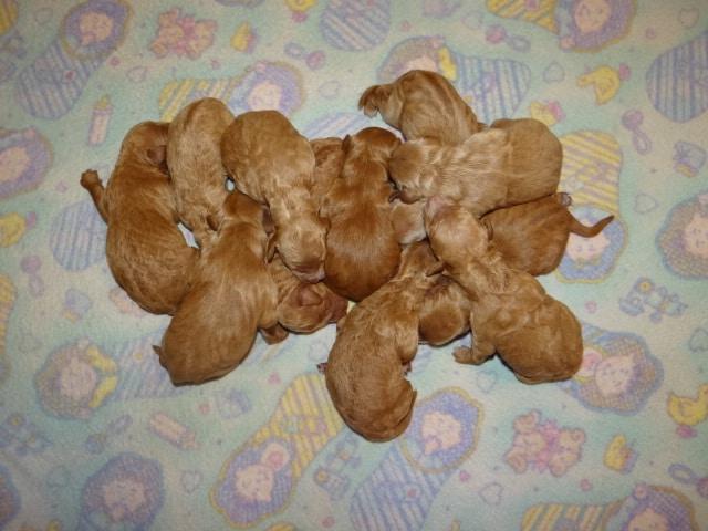 sage pups 5-10-21